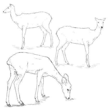 wild venison: Vector Set of Sketch Deers