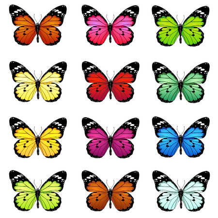 swallowtail butterfly: Vector Set of Colorful Cartoon Butterflies on White Bckground Illustration