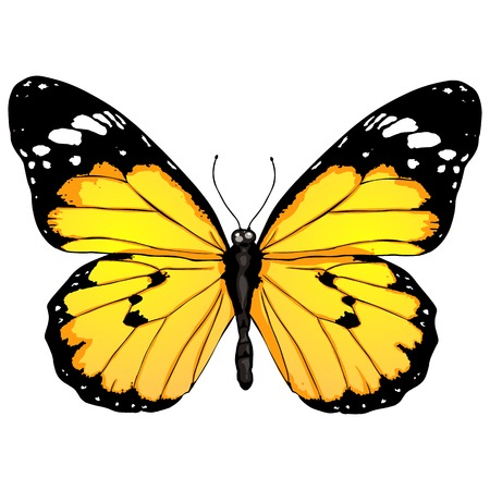 Vector Cartoon Color Butterfly on White Bckground