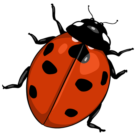 vector cartoon color ladybug on White Background