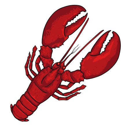 Vector Cartoon Red Crayfish on White Background