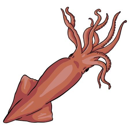 Vector Single Cartoon Squid on White Background