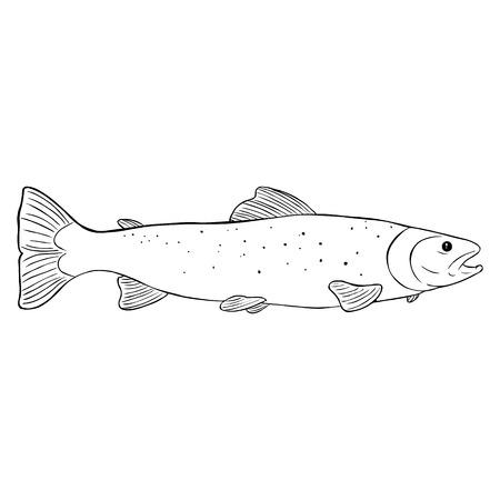 trout: Vector Line Art Sea Trout Illustration