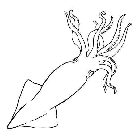 cephalopod: Vector Line Art Squid