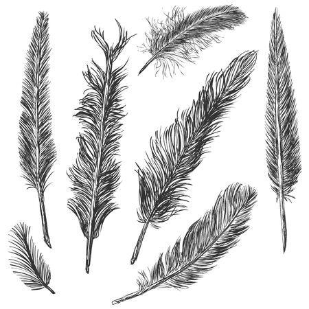 Vector Set of Sketch Plumage on White Background