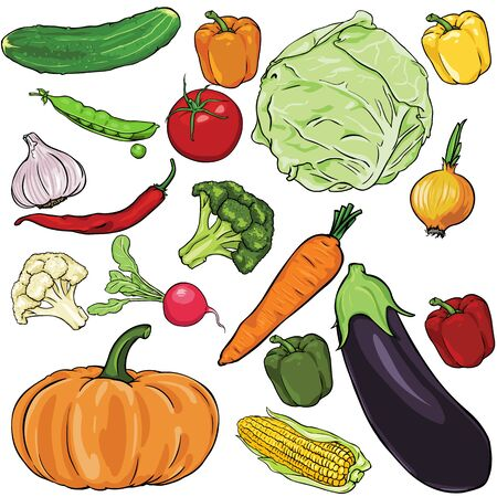 vector set of vegetables on White Background