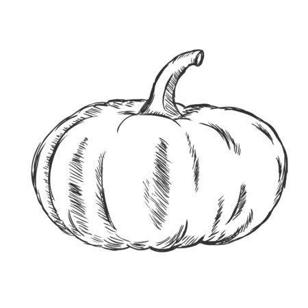 stocky: Vector Single Sketch Pumpkin on White Background Illustration