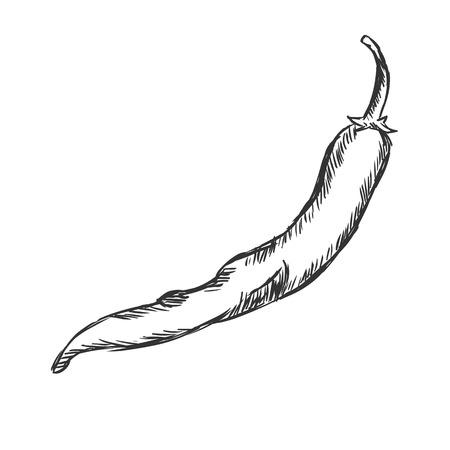 Vector Enige Schets Chili Pepper op Witte Achtergrond