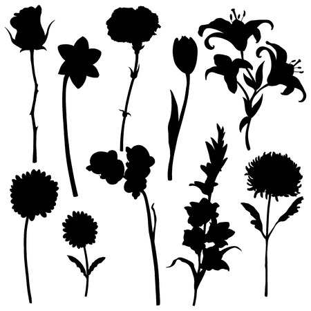 phytology: Vector set of flowers silhouettes on White Background Illustration