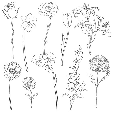 Vector Set of Outline Flowers on White Background
