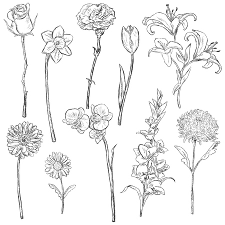 garden stuff: Vector Set of Sketch Flowers on White Background