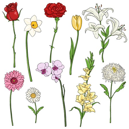 Vector Set of color Cartoon Flowers on White Background