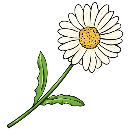 divination: Vector Cartoon Isolated Illustration - Camomile on White Background Illustration