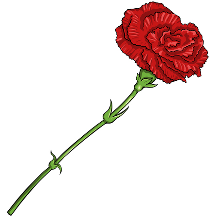Vector Cartoon Isolated Illustration - Red Carnation on White Background