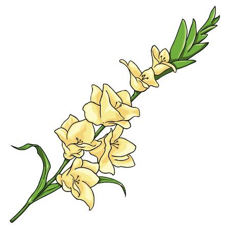 Vector Cartoon Isolated Illustration - Yellow Gladiuolus on White Background