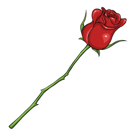 Vector Cartoon Isolated Illustration - Red Rose on White Background