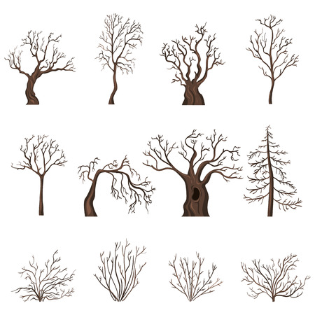bareness: Vector Set of Brown Cartoon Bare Trees and Shrubs without Leaves Illustration