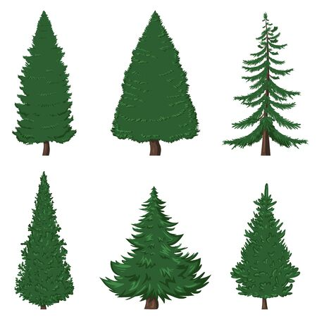 Vector Set of 6 Cartoon Pine Trees on White Background Illustration