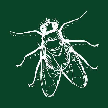 Vector Chalk Sketch Single Fly on Dark Green Background