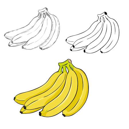 Vector Set of Differrent Illustration Style Bunches of Bananas. Process of Drawing