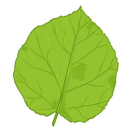 Vector Cartoon Illustration - Green Leaf of Hazel Tree