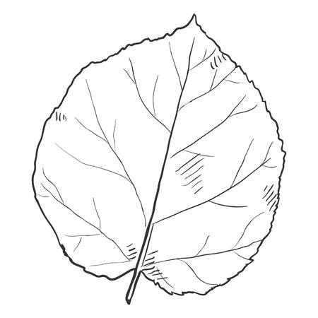 Vector Black Sketch Illustration - Leaf of Hazel Tree Illustration