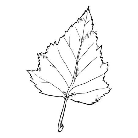 Vector Black Sketch Illustration - Leaf of Birch Tree