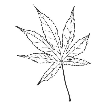 Vector Black Sketch Illustration - Leaf of Japanese Maple Ilustrace