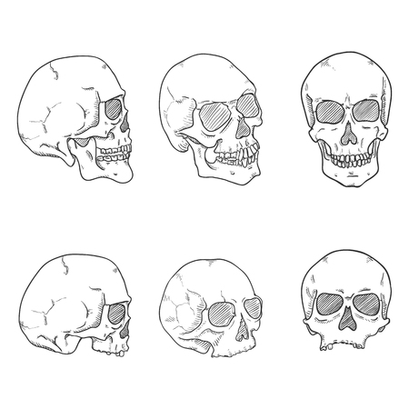 Vector Set of Hand Drawn Sketch Human Skull. Headbones Collection. Vettoriali