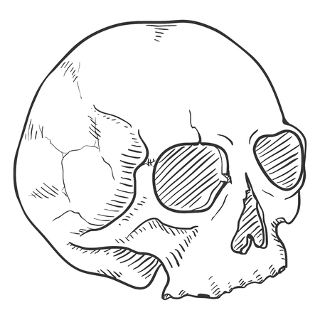 Vector Sketch Illustration - Human Skull without Lower Jaw