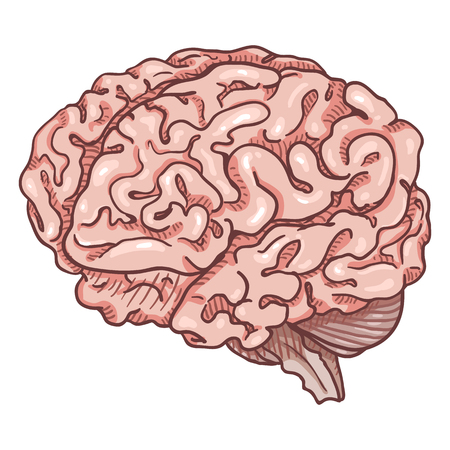 Vector Cartoon Pink Human Brain