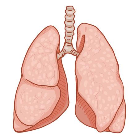 Vector Cartoon Human Lungs . Anatomical Organ Illustration.