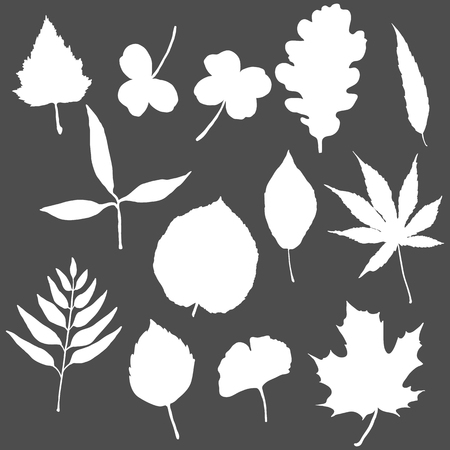 Vector Set of White Silhouette Tree Leaves
