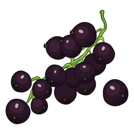 Vector Cartoon Black Currant Berries on Branch