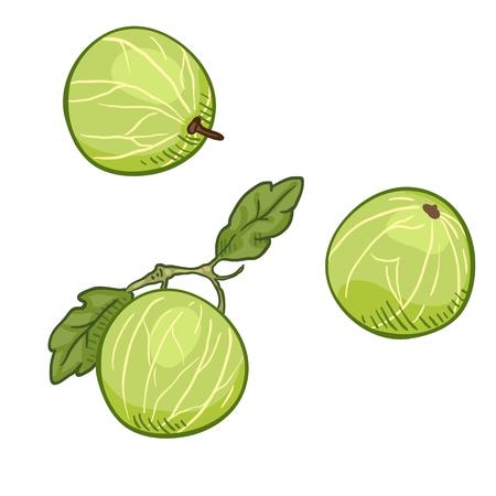 Vektor-Cartoon-Stachelbeere-Illustration