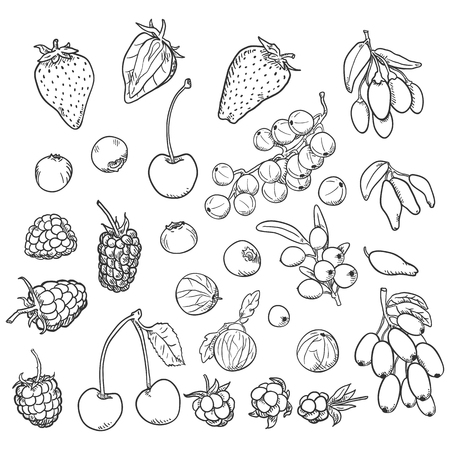 Vector Sketch Set of Berries. Different Types Vettoriali