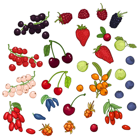 Vector Set of Cartoon Berries. Different Types and Variations Vettoriali
