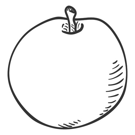 Vector Pencil Sketch Apple Illustration