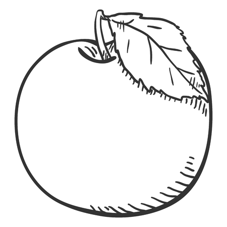 Vector Sketch Apple with a Leaf