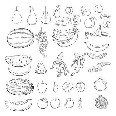 Vector Set of Sketch Fruits. Grapes, Melon, Watermelon, Pear, Apple, Banana, Apricot, Peach, Plum, Pomegranate.
