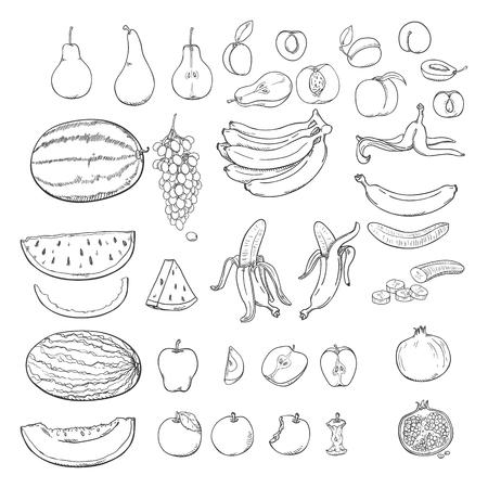 Vektor-Set von Skizzenfrüchten. Trauben, Melone, Wassermelone, Birne, Apfel, Banane, Aprikose, Pfirsich, Pflaume, Granatapfel.