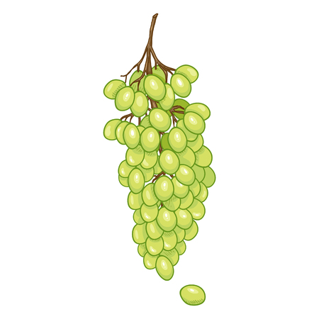 Vector Cartoon Green Grapes Bunch Ilustracja