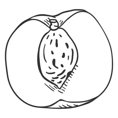 Vector Sketch Half of Peach