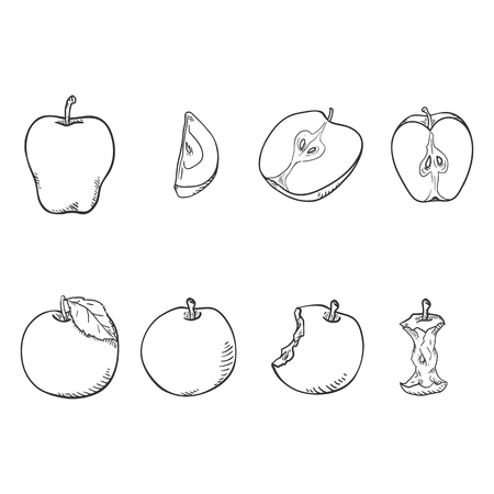 Vector Set of Sketch Apple Illustrations. Whole, Cut and Bitten Fruit