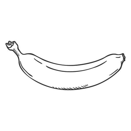 Vector Single Sketch Banana