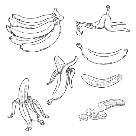 Vector Sketch Set of Banana Illustrations