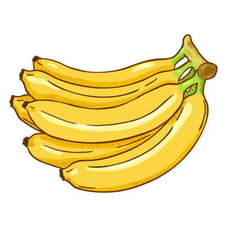 Vector Cartoon Yellow Bunch of Bananas 向量圖像