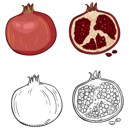 Vector Set of Cartoon and Sketch Pomegranate Illustrations