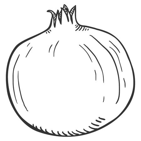 Vector Sketch Whole Pomegranate Ilustração