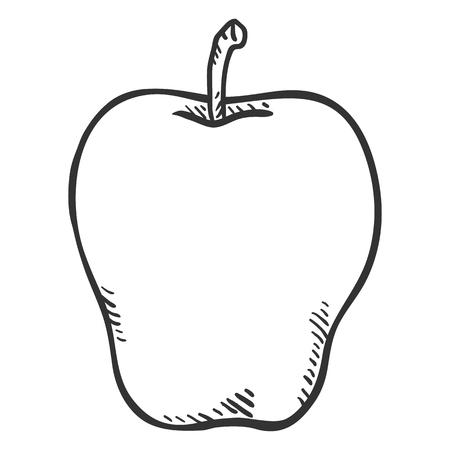 Vector Hand Drawn Sketch Apple